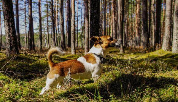 5 buone abitudini quando vai in montagna con il cane