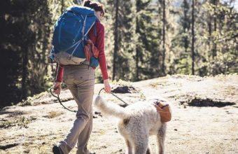 Trekking con il cane