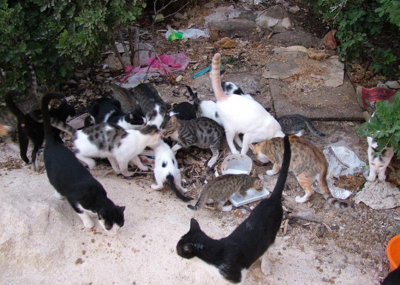 cos è una colonia felina