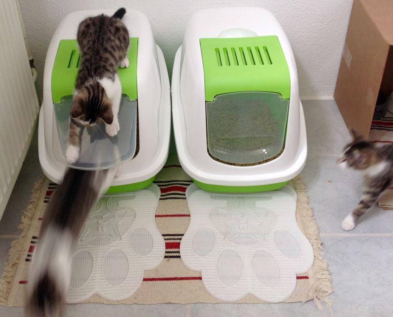 Come scegliere la lettiera gatto