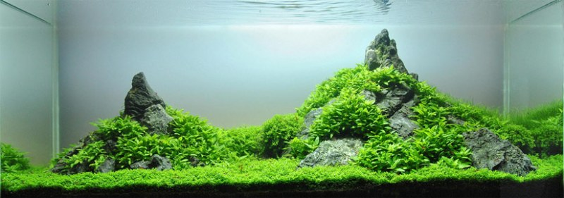 cos'è l'aquascaping