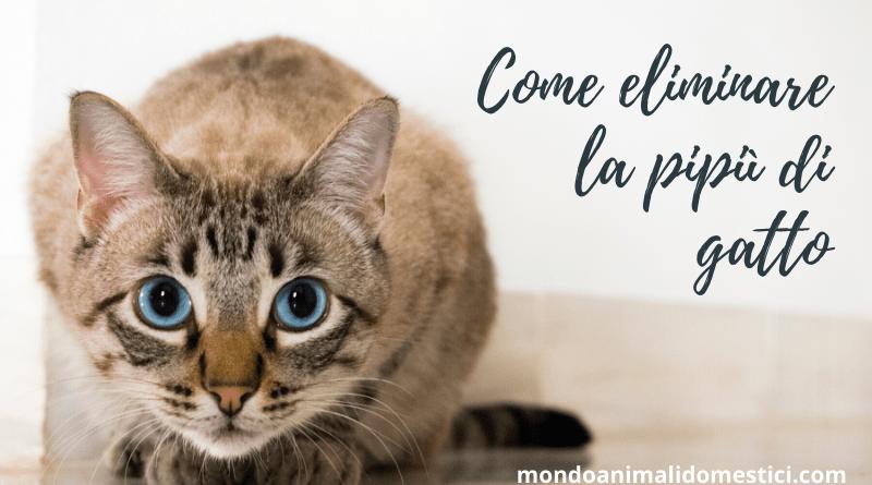 Come eliminare l'odore di pipì di gatto