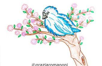 Uccellino azzurro di montagna, scopri la natura