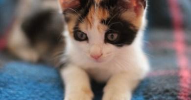 Micio micetto cucciolo di gatto