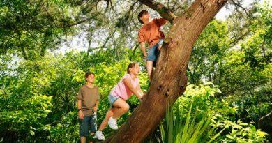 come arrampicarsi su un albero