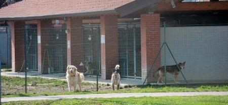 Risultati immagini per parco canile milano