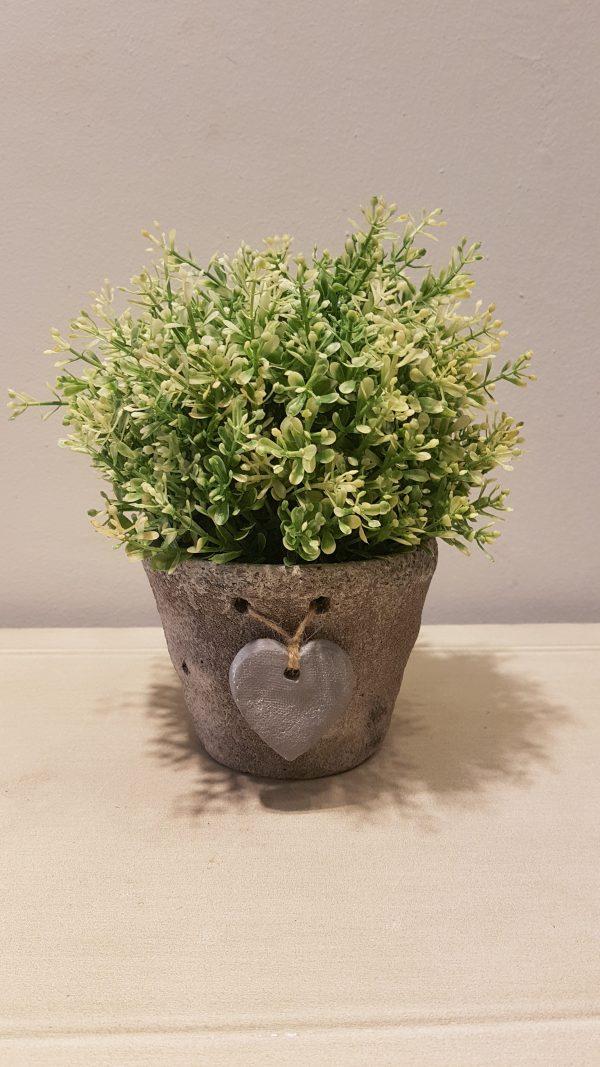vaso con pianta verde