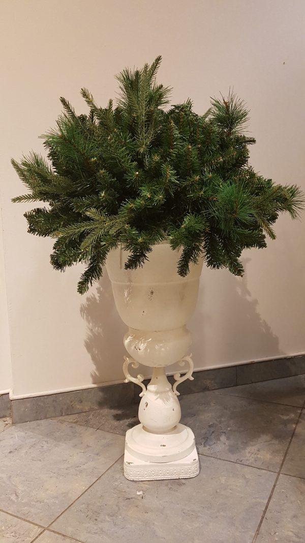 bosso di rami di pino con vaso