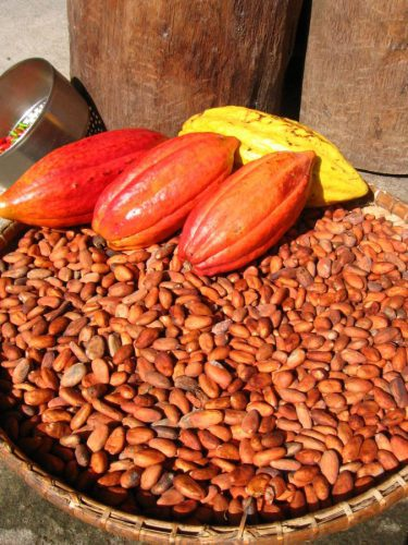 Frutto del cacao