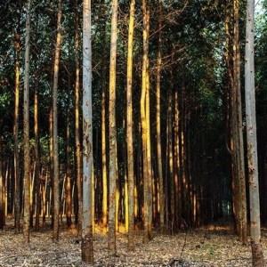 TreeCoin