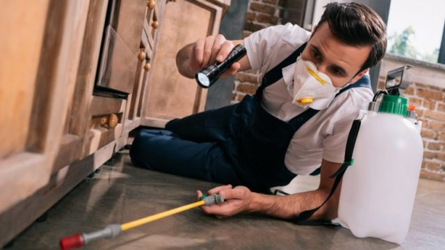 Pest Control Worker In Kitchen Cabinets
