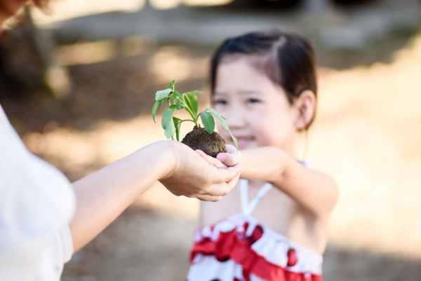 Little girl giving a seedling