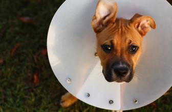 Best pet insurance deals