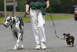 Mobile disabled people can make money dog walking