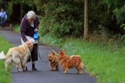 moneymagpie_dog-walking-make-60-an hour-while-getting-fit_senior-lady-dog-walker
