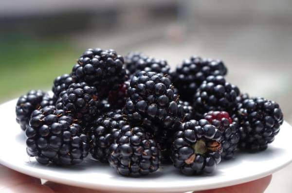 plate of Blackberries