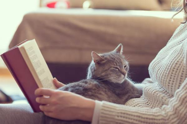 Pet cat sitting in lap of woman reading