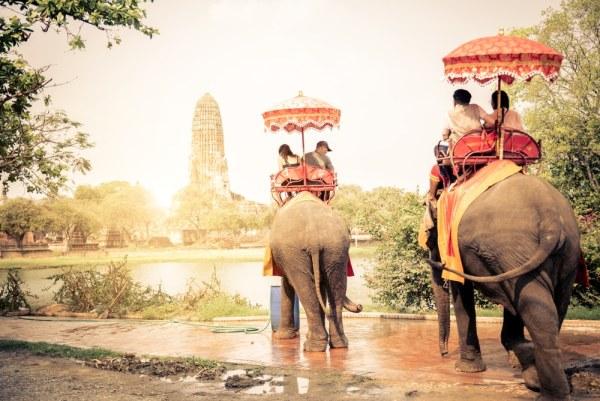 Elephant trecking experience