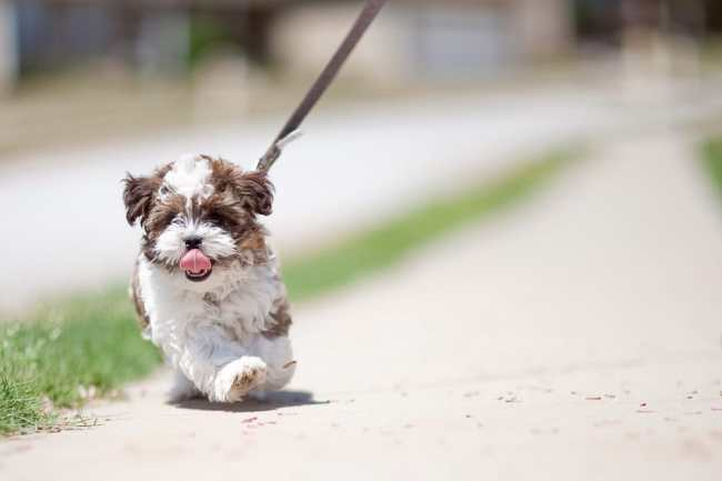 small dog on leash