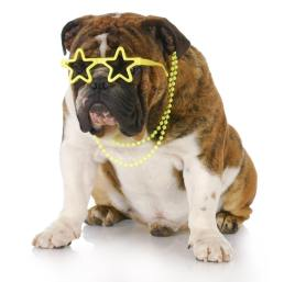 Make money turning your pet into a star