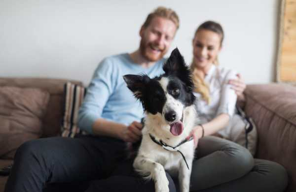 Couple sitting on the couch with a boarder collie
