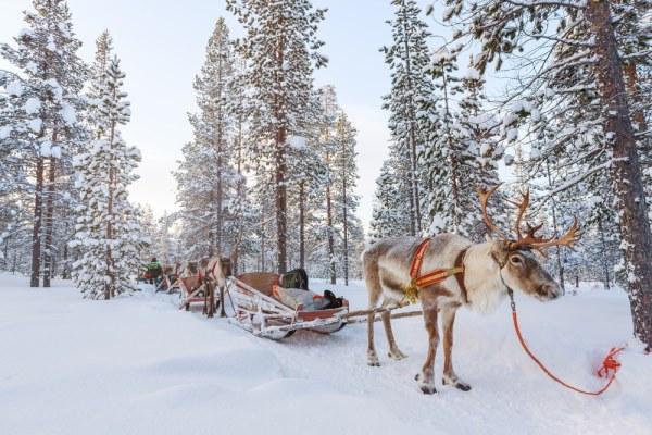 Winter reindeer sleigh