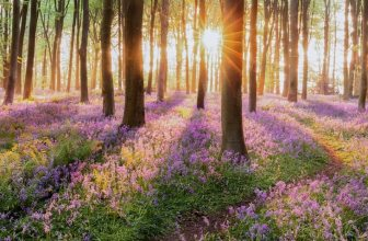 Receive money to grow a woodland