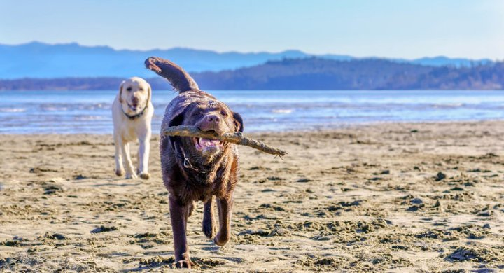 Dog beaches are a great free way to entertain your dog this summer