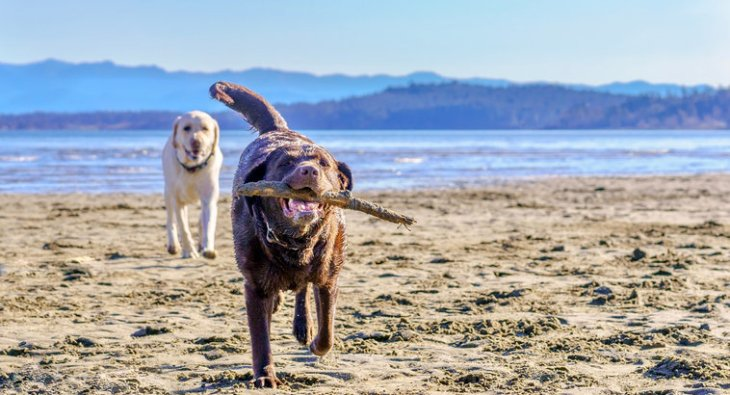 Dog beaches are a great free way to keep your dog entertained this summer