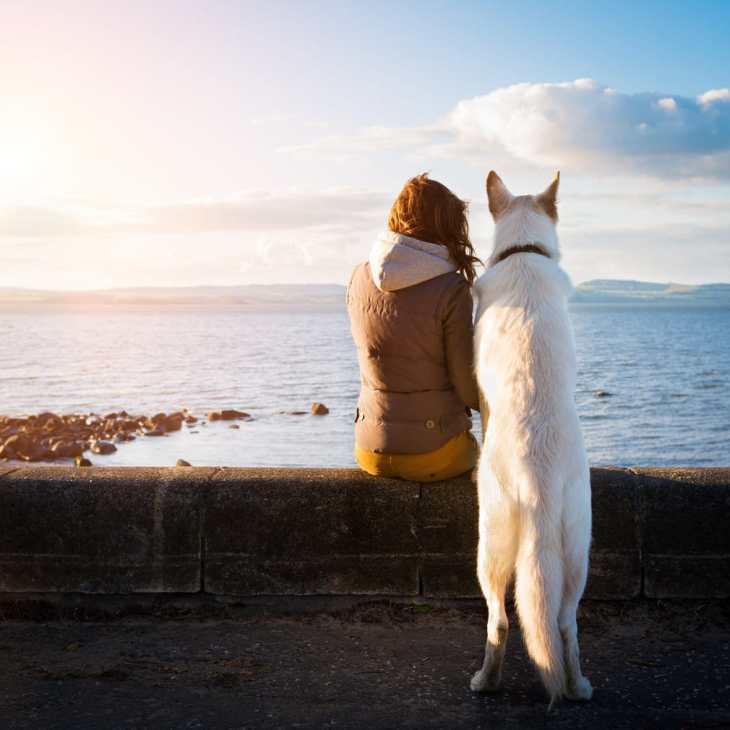 Free and fun ways to entertain your dog this summer
