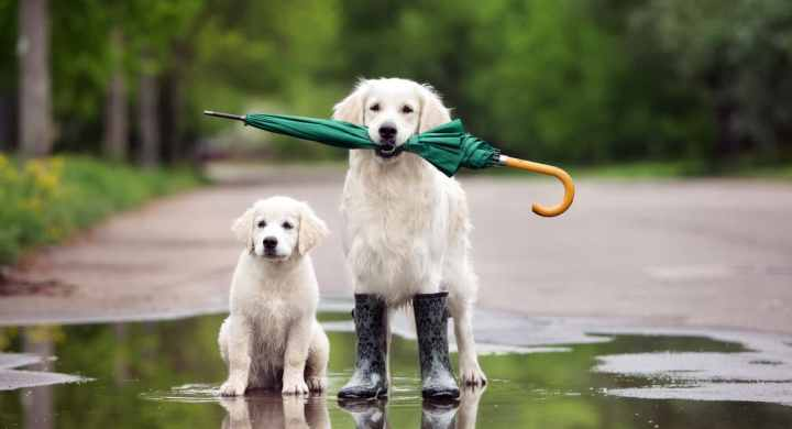 Share dog walks with a friend to reduce pet expenses