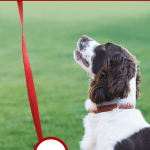 WAG App – Get Paid! Work for WAG Walking Dogs!