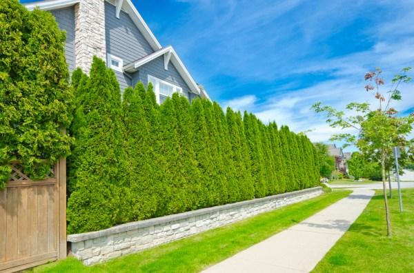 plant hedges bushes create