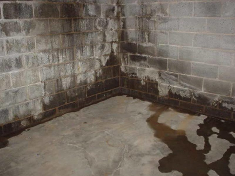 Mold on Concrete Block Walls: Determining source of fuzzy ...