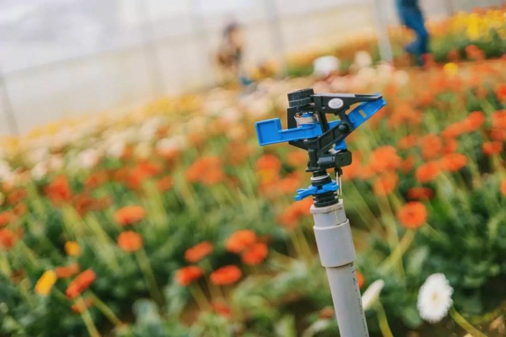 watering flowers, sprinkler