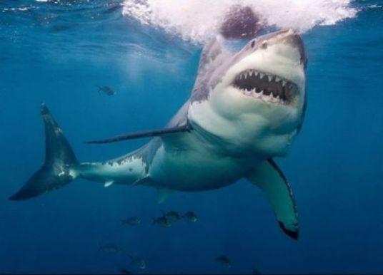 Κορωνοϊός: Μισό εκατομμύριο καρχαρίες θα θανατωθούν για το εμβόλιο