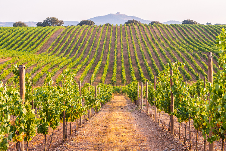 Best Wine Region To Visit Each Month