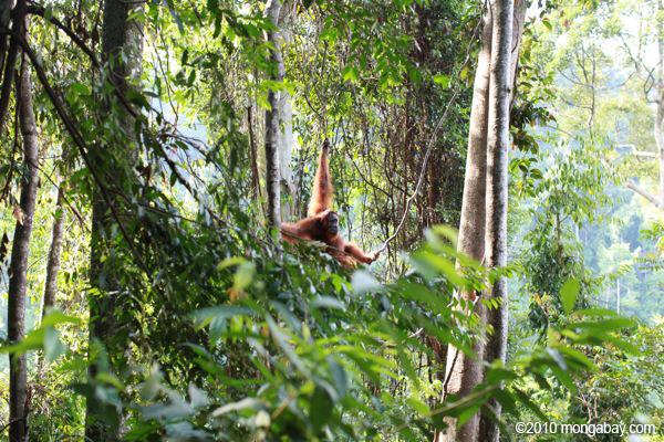 Gambar Hutan Lindung Langsa