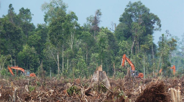 Laporan Penebangan Hutan Riau Potret Buruk Tata Kelola