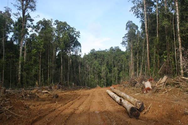 https://i0.wp.com/www.mongabay.co.id/wp-content/uploads/2013/05/Hutan-hutan-keramat-Nabire-yang-dibongkar.jpg