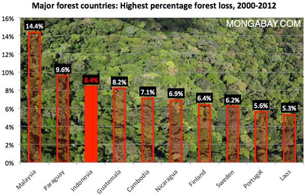 Temuan Peta Hutan Google Laju Deforestasi Meningkat di