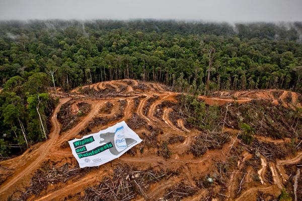 Peneliti UGM  Pembukaan Hutan Untuk Lahan Sawit Harus