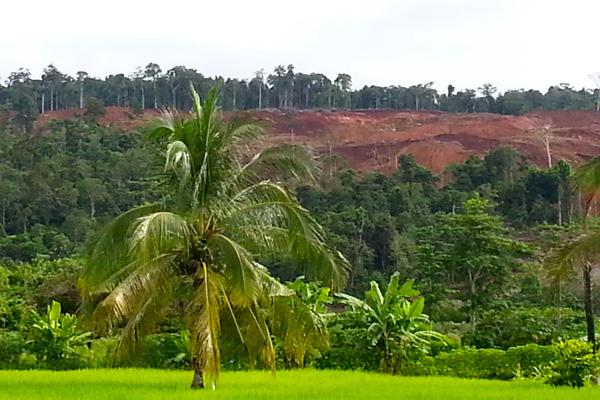 Hutan-hutan di pebukitan botak di Kabupaten Morowali, seperti di Kecamatan Bungku Timur, dan Bahodopi, bukan pemandangan asing lagi. Foto: Sapariah Saturi