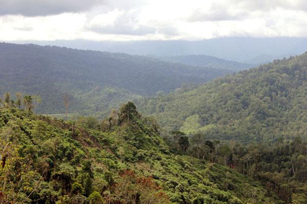 Inilah lembah Krueng Peusangan. Foto: Chik Rini