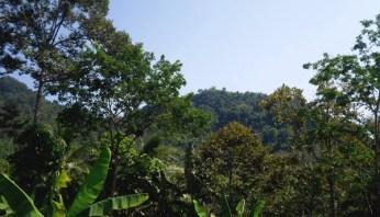 Ketika Mantan Perambah Kembangkan Wisata Hutan di Bukit Cogong