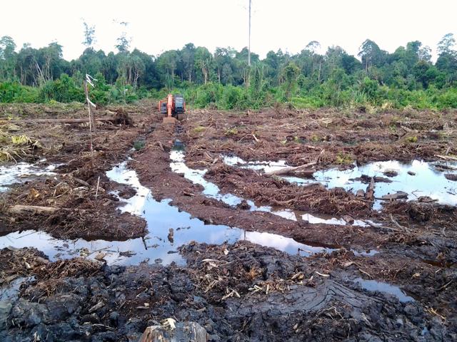 Alat berat terparkir saat rombongan wartawan mendatangi hutan  yang sudah ditebang. Foto: Made Ali