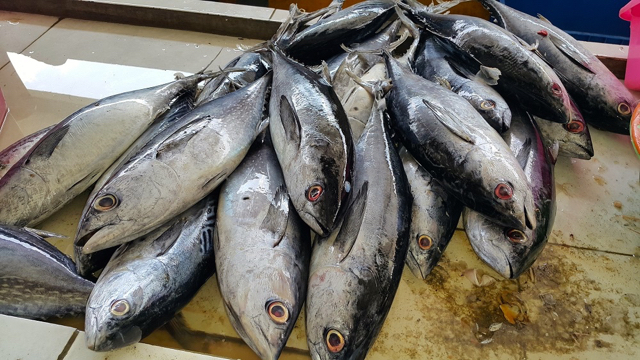 Tuna segar tangkapan nelayan Gunung Kidul, Yogyakarta. Beragam masalah mengelilingi sektor perikanan, dari penyakit ikan, ekosistem rusak sampai perubahan iklim. Foto: Tommy Apriando
