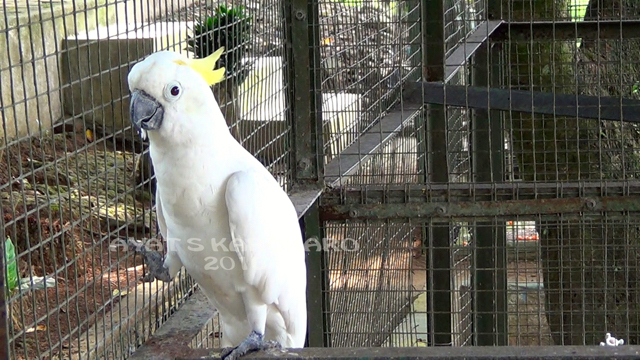 Tak Berizin Satwasatwa Taman Binatang Mini Inipun Disita