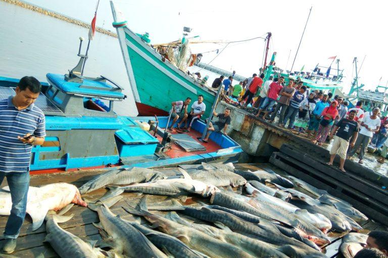 Menikmati Hasil Laut dari Aceh Bagian III  Mongabaycoid