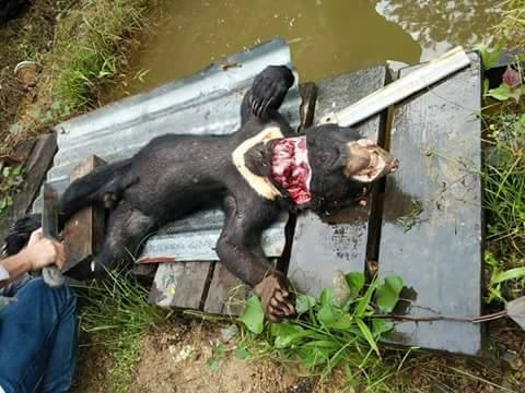 Dibunuh lalu Diunggah ke Facebook Apa Dosa Beruang Madu